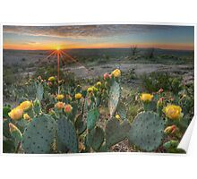 Texas Hill Country Images - Prickly Pear Cactus at Sunset 1 Poster