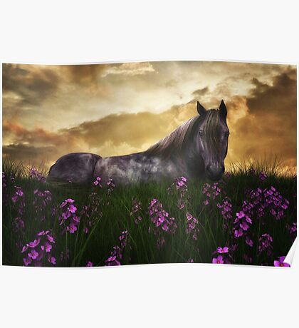 Beautiful Horse 4 Poster