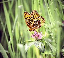 Butterfly on Flower, CT by Marissa Mancini