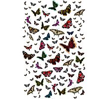 Beautiful Butterflies Photographic Print