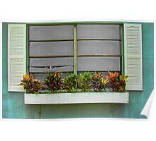 The Window Box Neighbor  Poster