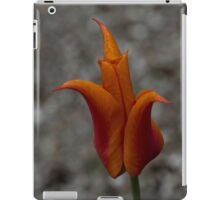 A Flamboyant Flame Tulip in a Pebble Garden iPad Case/Skin