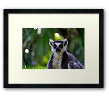 Lemur Look Framed Print