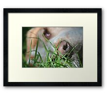 Close up on Gracie  Framed Print