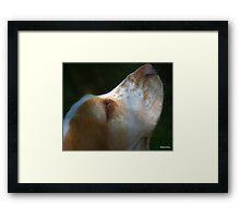 Serene Gracie Framed Print