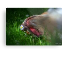 Gracie and the daisy  Metal Print