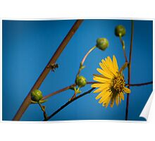 Now Arriving - Bee 52 Poster