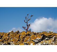 Life on the Wall Photographic Print