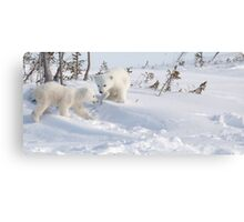 Polar bear cubs venturing away from Mom Canvas Print