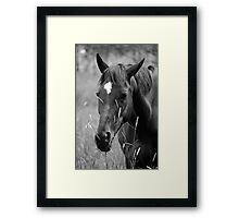 Horse Portrait - BW Framed Print