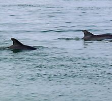 Playful Dolphins by Robert Brown