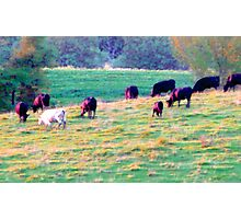 Cows on Parade! Photographic Print