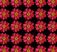 Pink and Yellow Zinnia Flower Pattern on Black by pjwuebker