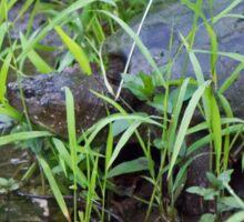 Turtle in Water Sticker