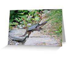 Turtle Climbing Greeting Card