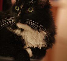 Tuxedo cat by Lynn Starner