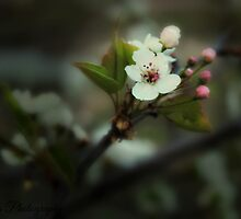 Flower by Josie-Traylor