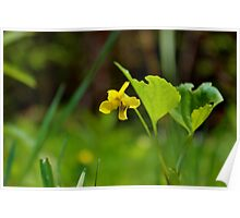 Wild Yellow Violet Poster