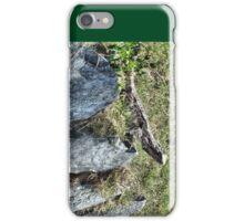Sunning Lizard iPhone Case/Skin