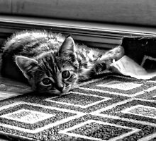 Kitty Mat by EvanSorrell
