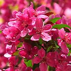 Pink Profusion by lorilee