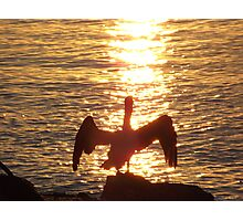 Pelican at Sunset Photographic Print