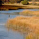 Golden Marsh by phil decocco