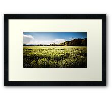 italian fields in the countryside Framed Print