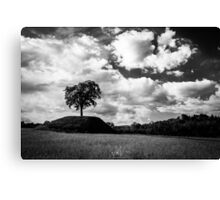 lonely tree in the italian countryside Canvas Print