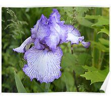 Iris in the Weeds Poster