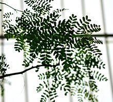 Kew  by MsheArt2