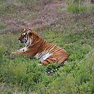 Tiger Rescue by Jokaylena Leonard