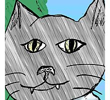 Stan the cat Photographic Print