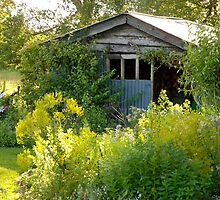 The Wood Shed by Mike  Waldron