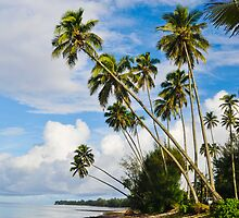 Palm Trees in Rarotonga, Cook Islands, South Pacific by jcimagery