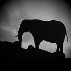 Elephant in Silouette by Sandra Caven