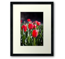 Red Tulips Framed Print
