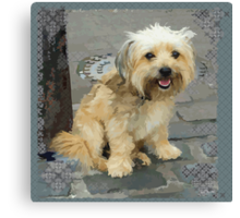 Louie the Shorkie-Tzu : Shih Tzu Yorkshire Terrier (Yorkie) Mix Canvas Print