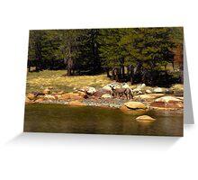 Mountain Lake Wildlife Greeting Card