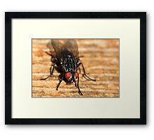 Big Eyed Fly Framed Print