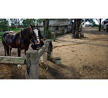 Australiana Pioneer Village Photographic Print