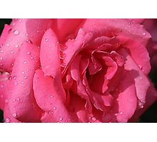 Rose Is a Rose Photographic Print