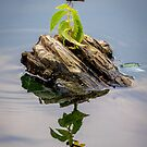 Dragonfly Island by Mikell Herrick
