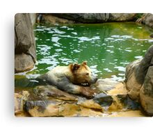 Bear is not Amused Canvas Print