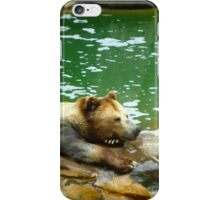 Bear is not Amused iPhone Case/Skin