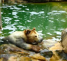 Bear is not Amused by Cristy Hernandez