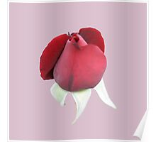 Red Rose Bud Poster