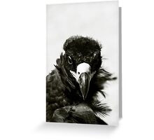 Vulture, Mongolia Greeting Card