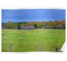 Nova Scotian Sheep in Autumn Poster