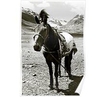 Horse wearing Kazach designed coat, Bayan Ulgii, Mongolia Poster